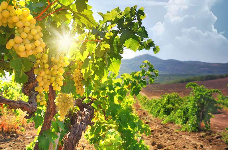 The sea- made wines of Cyprus wine villages! Main Image Gastronomy Cyprus | Tours & Events