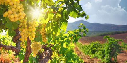 The sea- made wines of Cyprus wine villages!